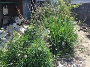 庭の手入れ(草刈り前)