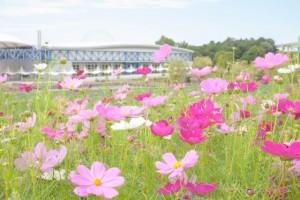 自然がきれいな愛知県