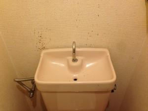 トイレの掃除前(ゴキブリのフン除去)1