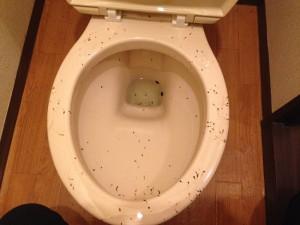 トイレの掃除前(ゴキブリのフン除去)