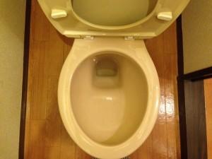 トイレの掃除後(ゴキブリのフン除去)3