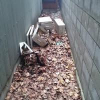 家の周りの大掃除前1