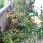 家の裏の雑草処理前
