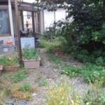 庭の除草、掃除前