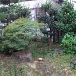 庭木の伐採、剪定後