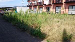 アパートの除草作業前2